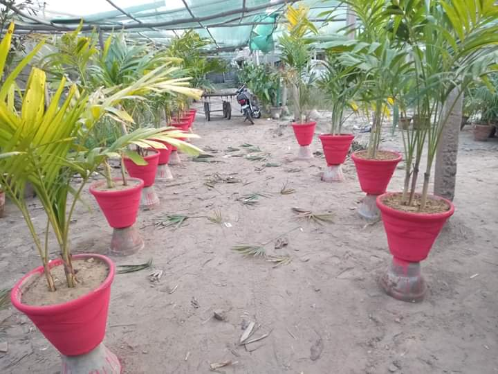 indore and outdoor plant available